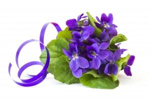 Viola odorata -  spring flowers bouquet